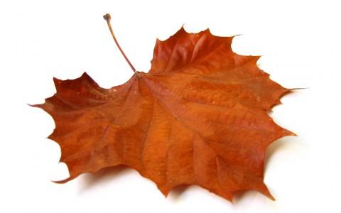 fall-leaf-01